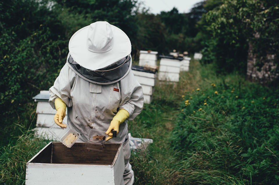 the benefits of agri tourism and this image of a lady harvesting honey